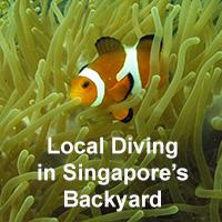 Dive Courses Pulau Hantu